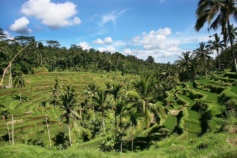 Villa Bamboo nearby attraction of Ceking Rice Terraces